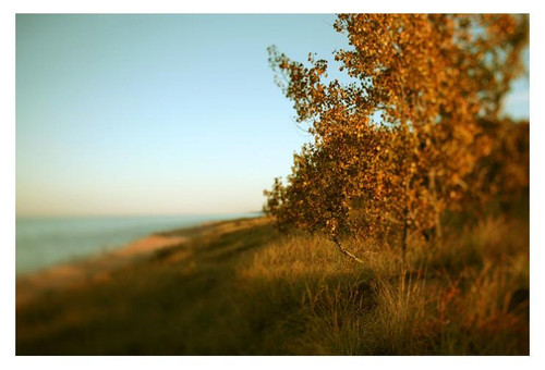 Amber - Fine Art Photograph