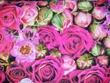 Budding Romance - Rose - per half metre length