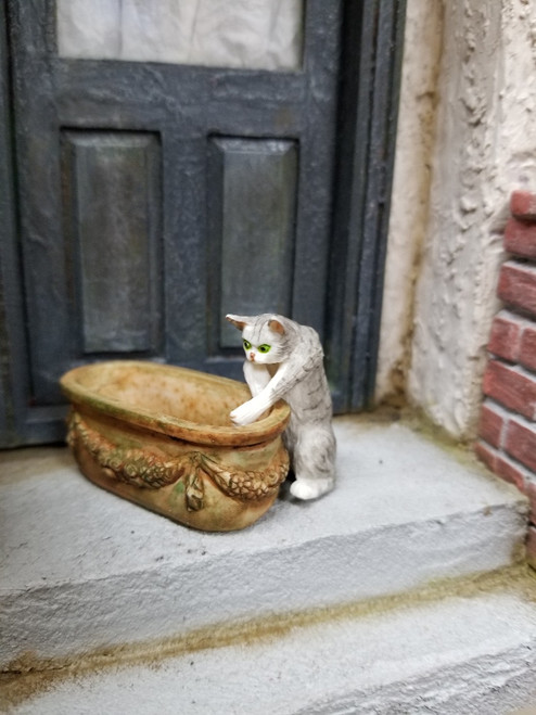 Reaching Grey and White Miniature Cat