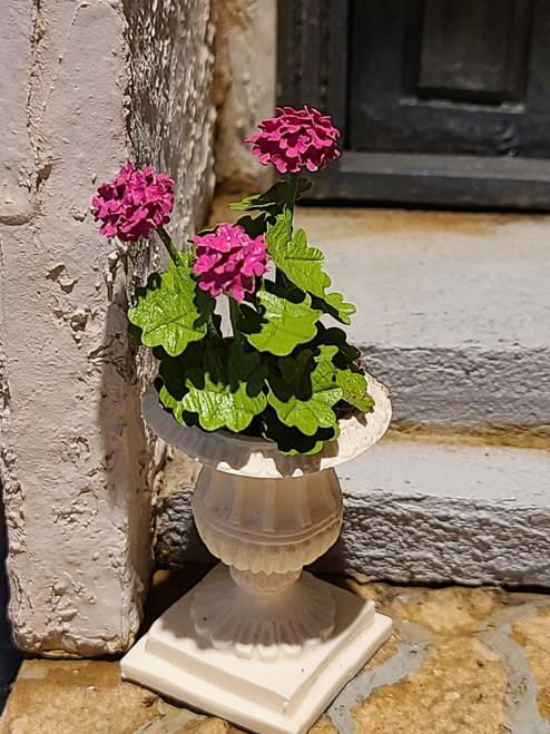 Miniature Pink Geraniums in Planter