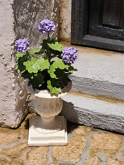 Miniature Purple Geraniums in Planter