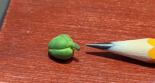 1/12 Scale Handmade Green Pepper