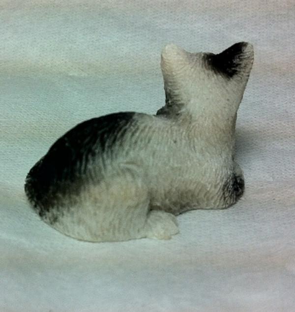 Black & White Cat Sitting