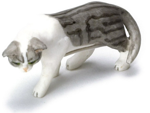Grey & White Creeping Cat