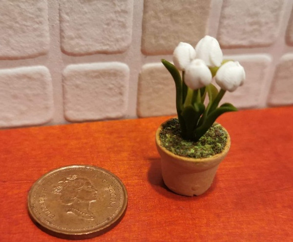 Potted Tulip - White