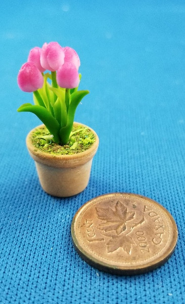 Potted Tulip - Two Tone Pink