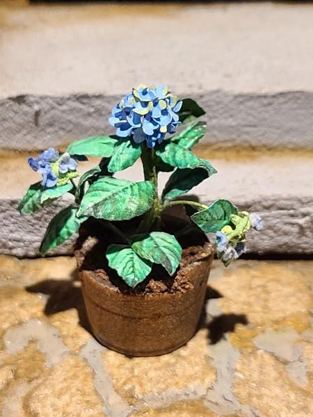 Miniature Blue Hydrangea in Wooden Planter