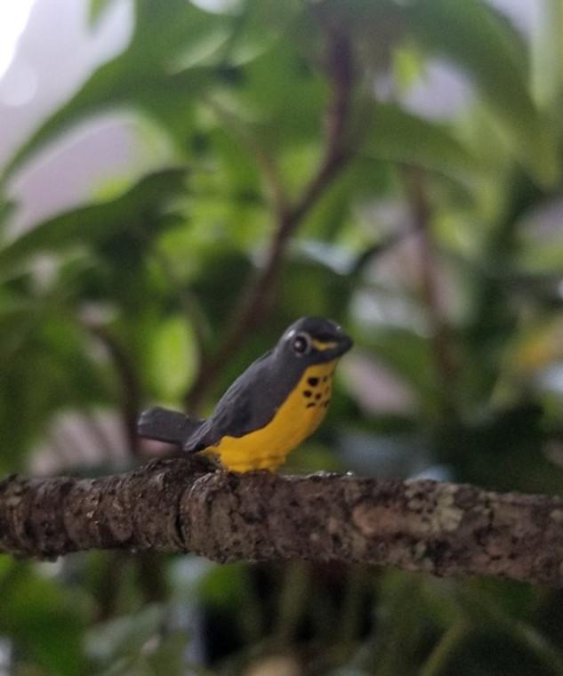 Canada Warbler Bird