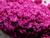 Possessed Toys eyeshadow - red violet eyeshadow