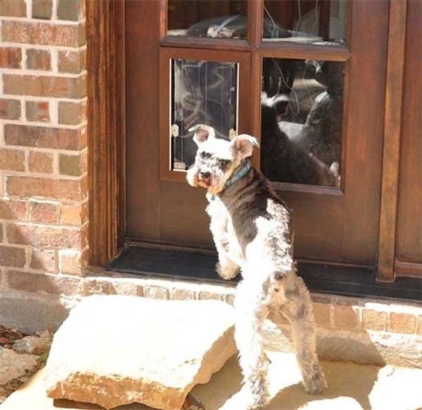 Custom MaxSeal French Door Pet Door