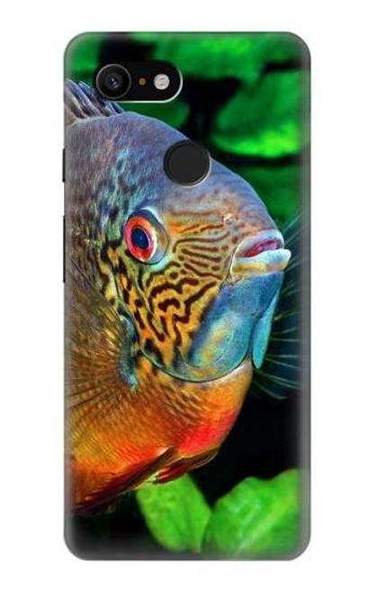 S1812 Cichlid Fish Case For Google Pixel 3