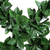 Holly Leaf Detail