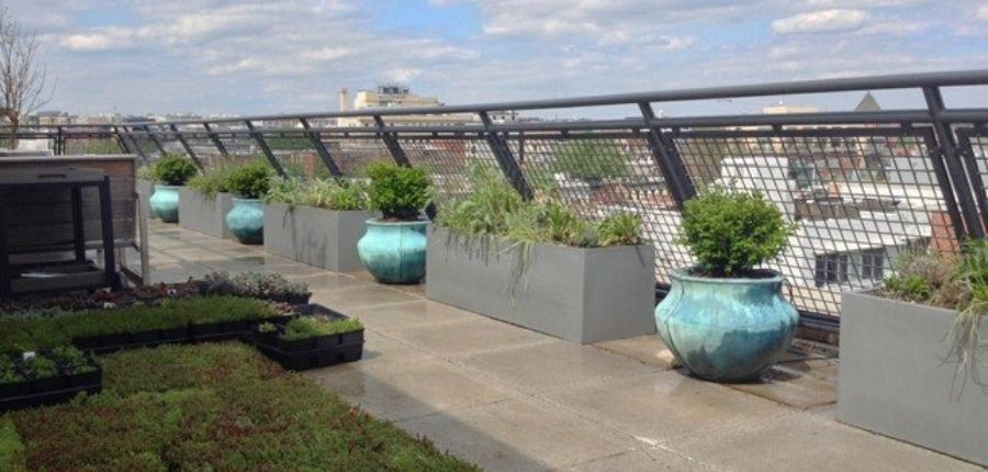bell-jar-planters-in-london-on-rooftop