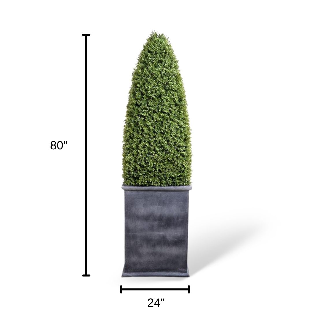 boxwood-dimensions-with-container