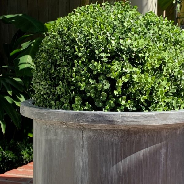 grosvenor-planter and faux boxwood globe