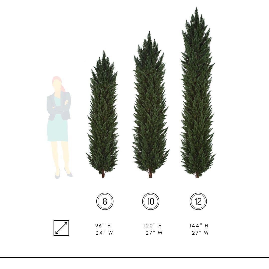 italian-cypress-dimensions polyblend