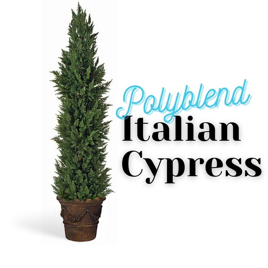 polyblend-italian-cypress-header