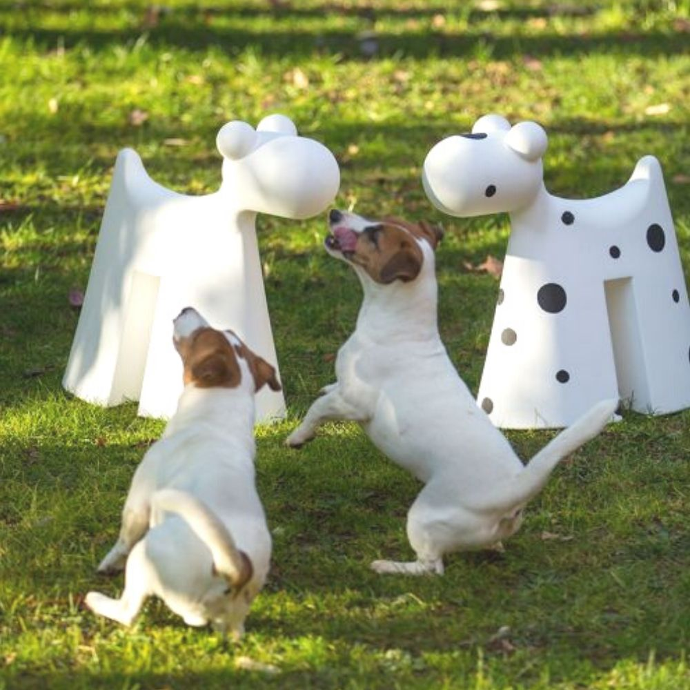 serralunga-doggy-at-play-in-the-park