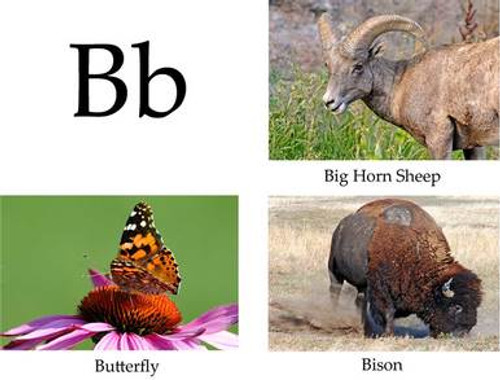 ABCs of Nature - Book