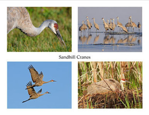 Photo Note Cards - Sandhill Cranes