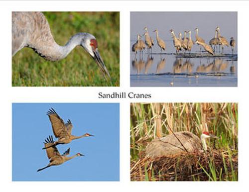 Photo Note Cards - Sandhill Cranes