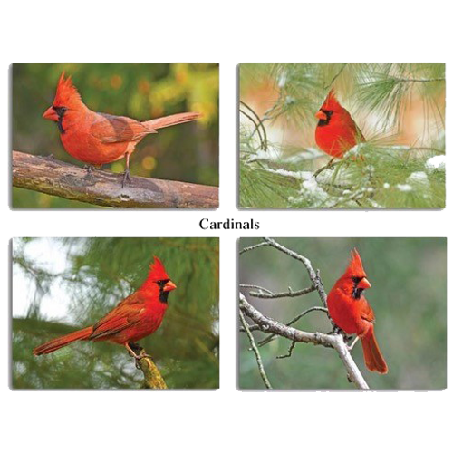 Cardinal Note Card Set, view of full assortment