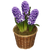 Flower Bulb of the Month Gift