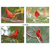 Cardinal Note Card Set, view of full assortment