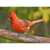 Cardinal Note Card by Wolf's Nature Vision Photography - Alt Image 1