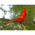 Cardinal Note Card by Wolf's Nature Vision Photography - Alt Image 3