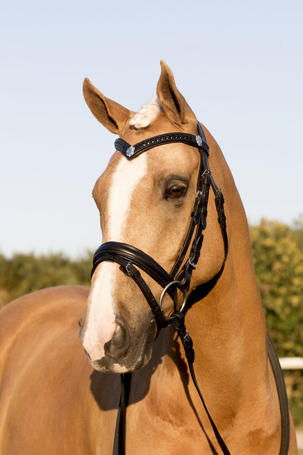 Black Snaffle Bridle With Plaited Shield Browband