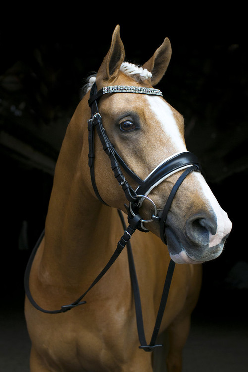 Black And White Snaffle Bridle With V Bling Browband