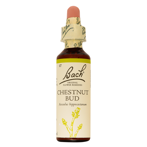 Bach Original Flower Remedies Chestnut Bud is for people who fail to learn the lessons of life by experience
