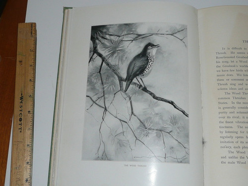 1901 Bird Portraits by Earnest Seton-Thompson, First Edition First Printing