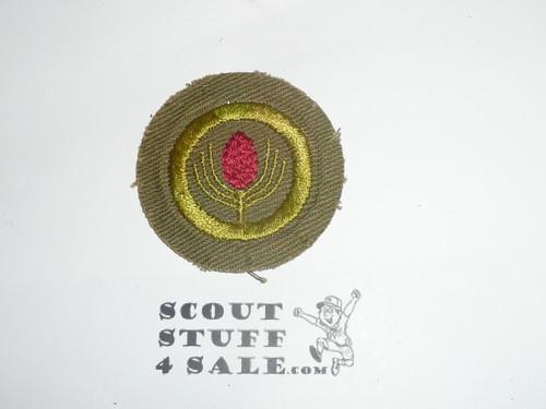 Forestry - Type E - Khaki Crimped Merit Badge (1947-1960)