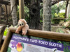 Adopt Sloths