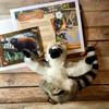 Adopt Lemurs