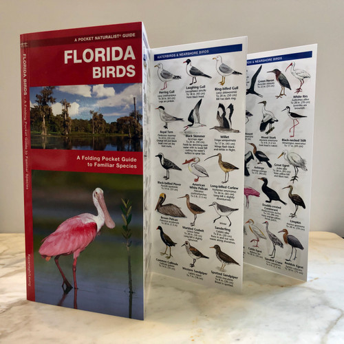 Florida Birds Pocket Guide