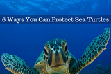 It's Turtle Time: 6 Ways You Can Protect Sea Turtles in South Florida