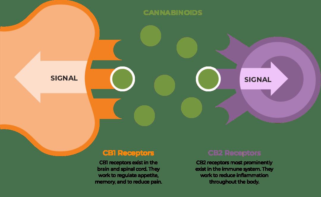 cannabinoids-r2.png