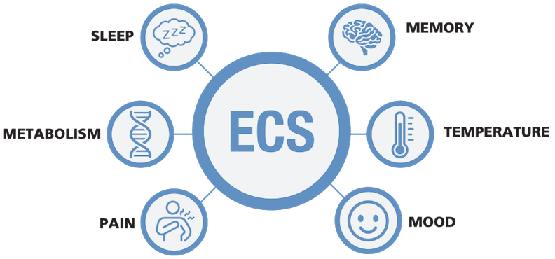 ecs-system-2.png