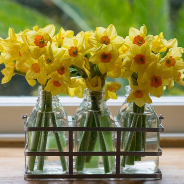 4.Spring Delight