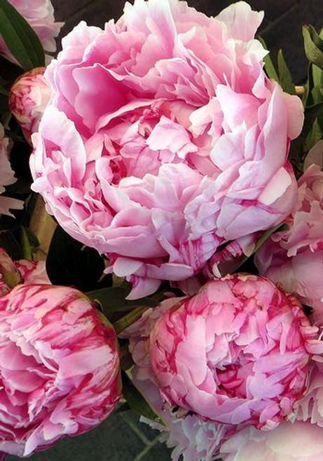 Beautiful British Bouquet