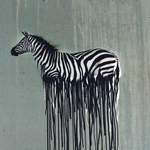 Wild Zebra:  Jersey Knit Panel