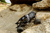 GMADE RC 1/10 Rock Buggy GOM GR01 Rock Crawler *RTR* #GM56010
