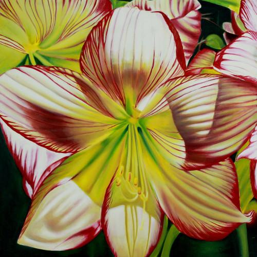 Hybrid Hibiscus Floral Art 'Hibiscus Charm'
