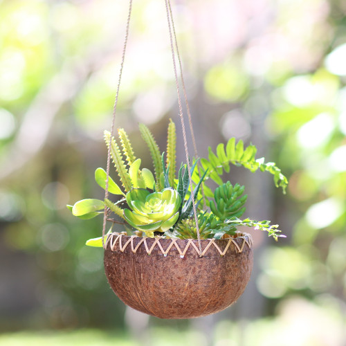 Hanging Coconut Shell Plant Pot 'In the Rough'