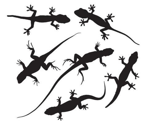 Reusable Stencils, Lizards, Newts, Chameleons, Salamanders, Reptiles