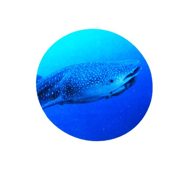 Sticker of Whale Shark