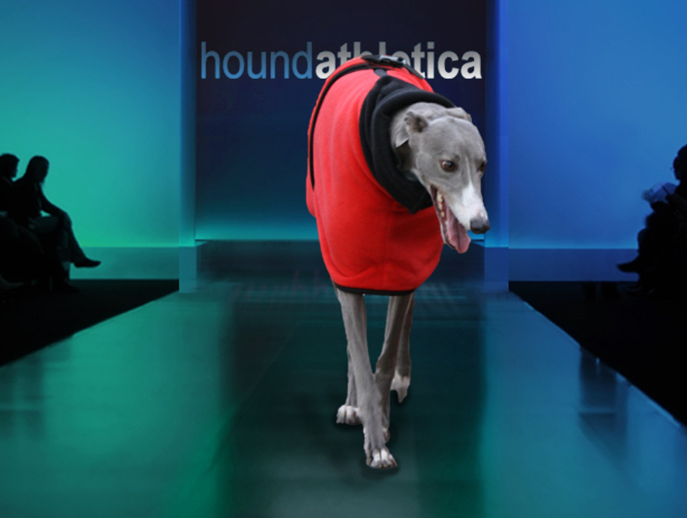 greyhound winter coat